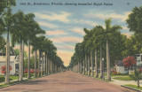 14th St. Showing Beautiful Royal Palms